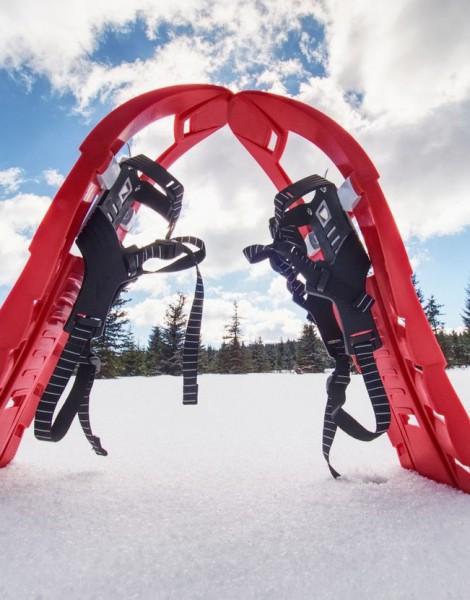 Ski-raquette (ski hok)